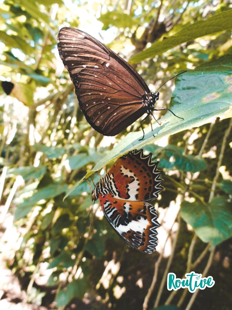 mariposario routive butterfly park bali ubud indonesia